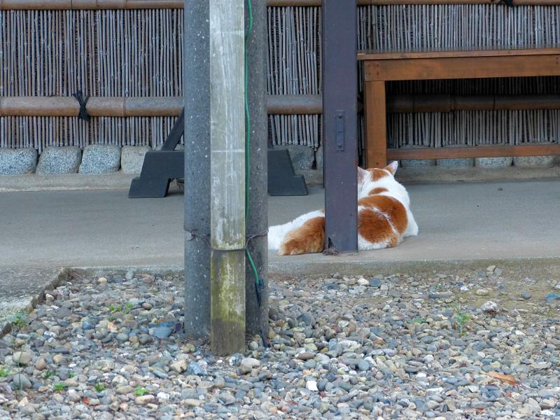ベンチ近くの白茶猫2