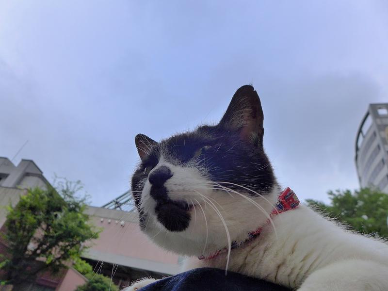 膝で寛いでる白黒猫1