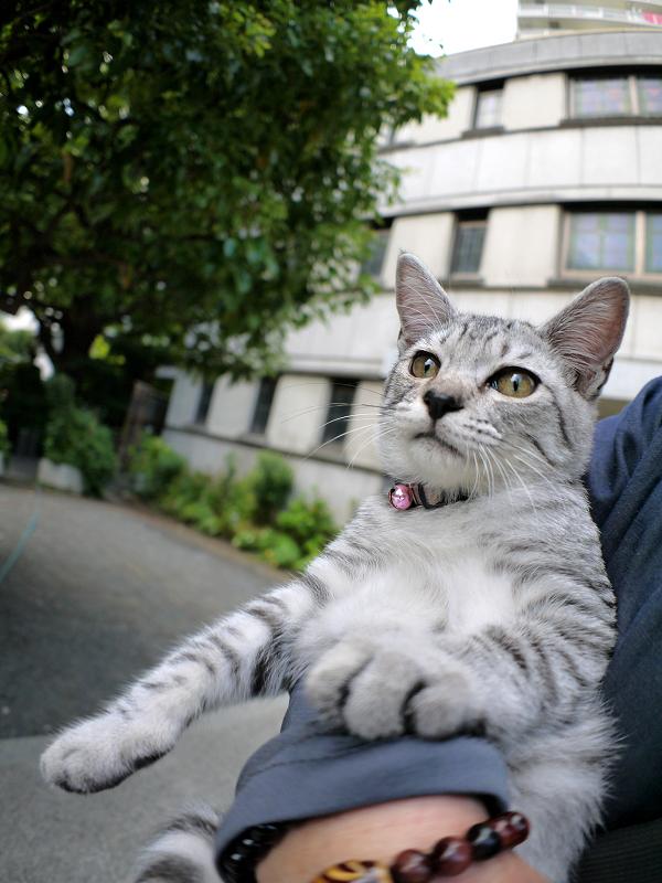腕の中で暴れるサバトラ仔猫2