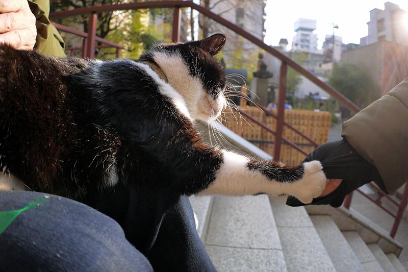 猫パンチを出してる黒白猫2
