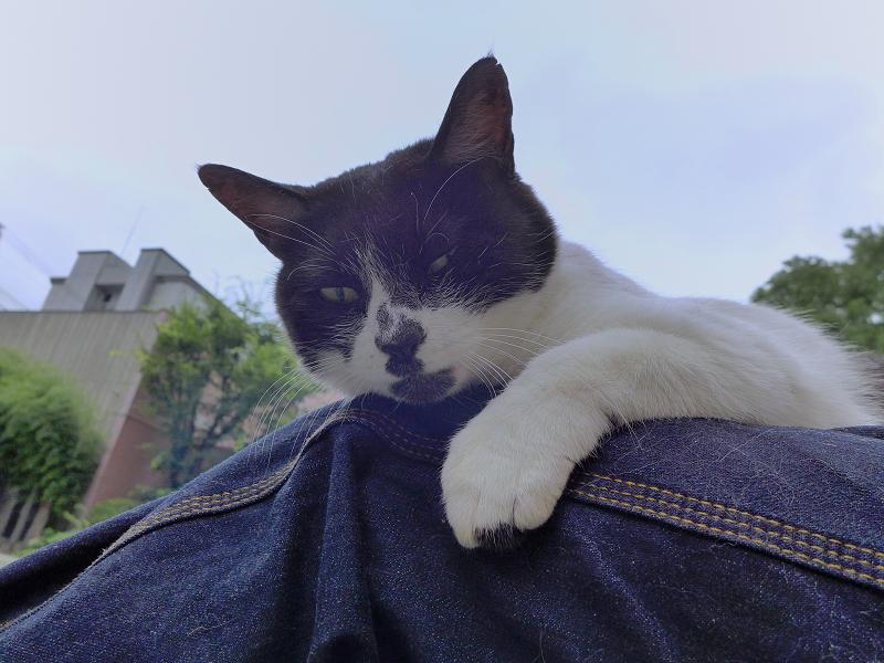 膝で寛いでる白黒猫2