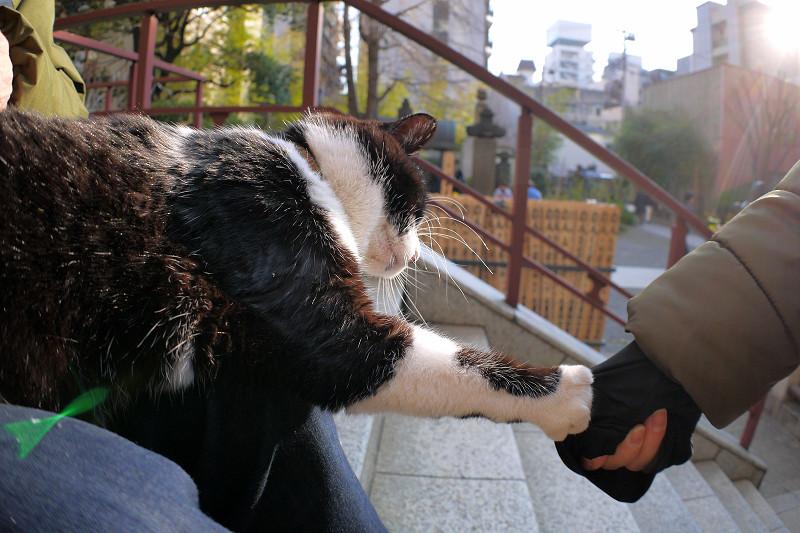猫パンチを出してる黒白猫3