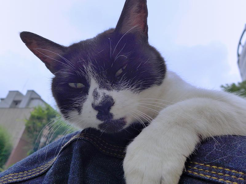 膝で寛いでる白黒猫3