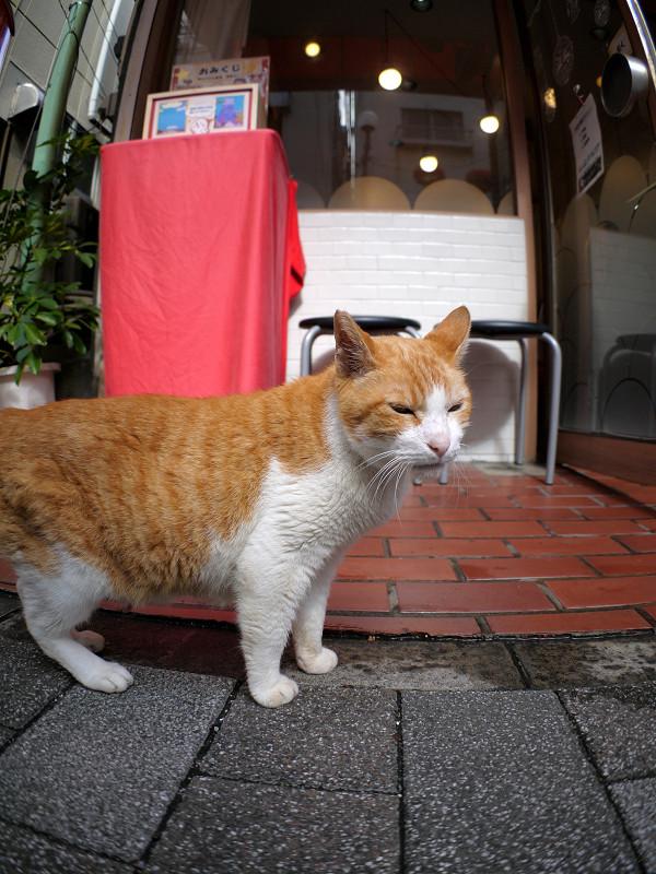 お店前の茶白猫1