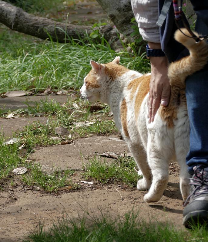 腰を触られる白茶猫1