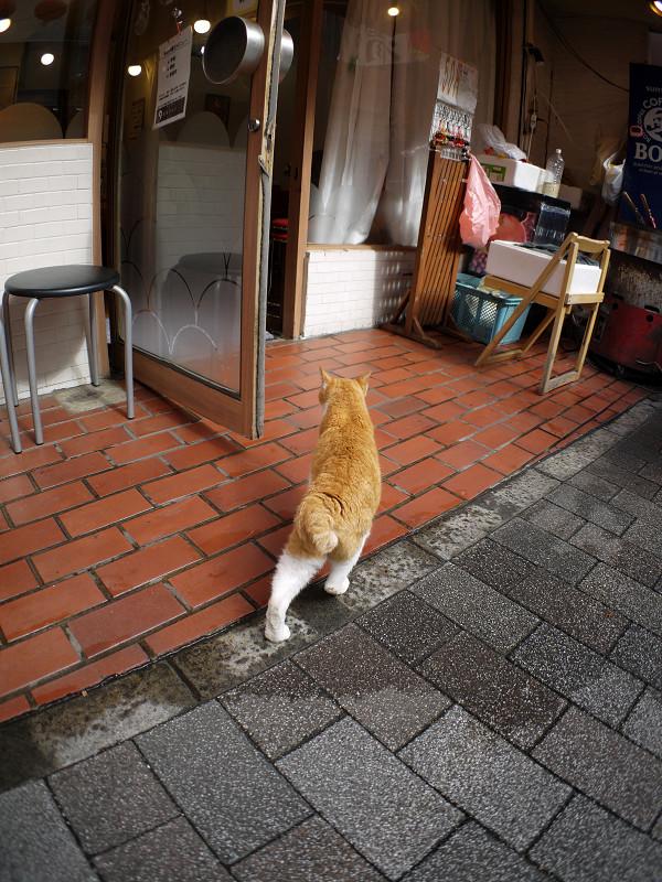 お店前の茶白猫2