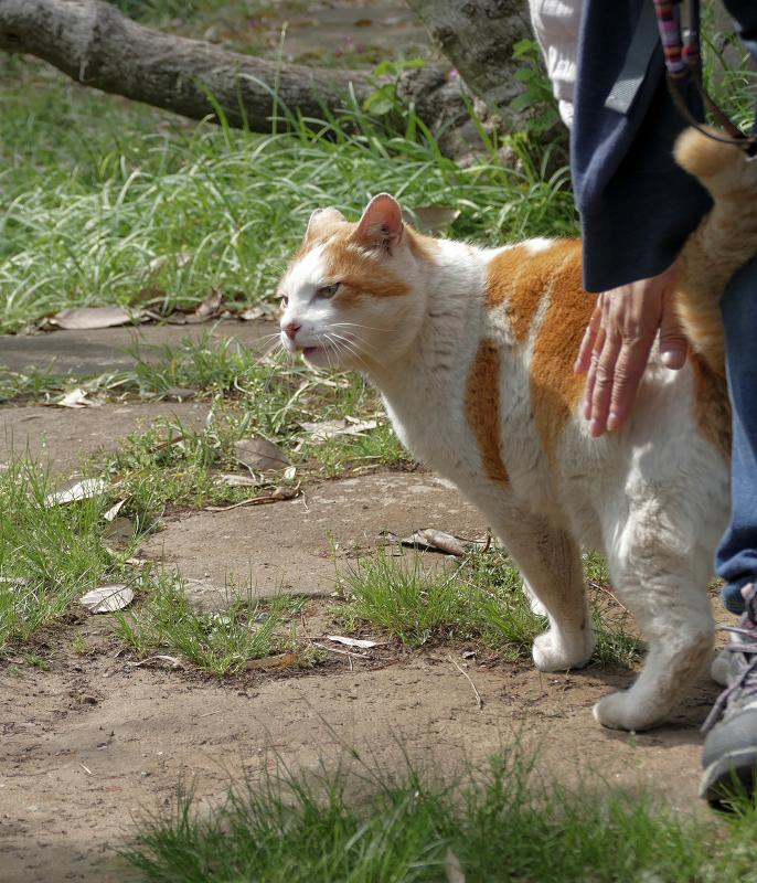 腰を触られる白茶猫2