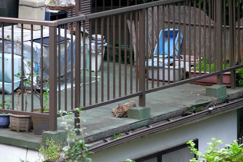 ベランダで寝ている猫2