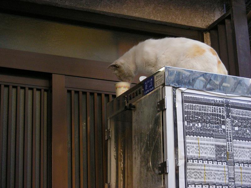 冷蔵庫とカップ麺と猫1