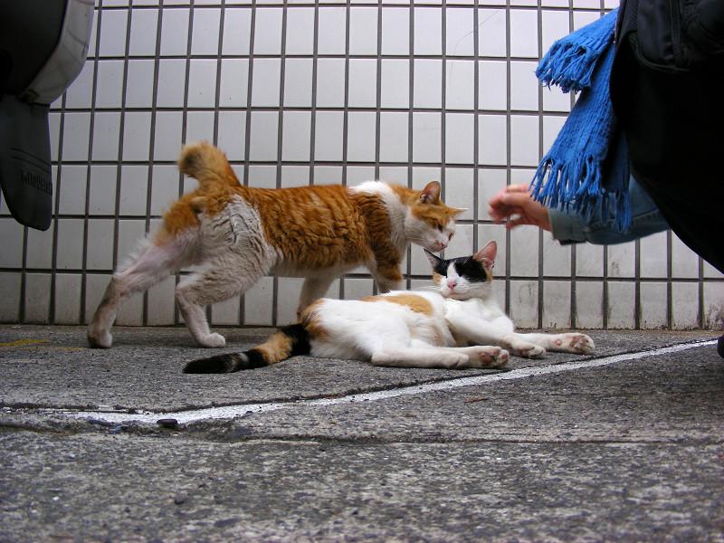 タイル前の猫2匹1