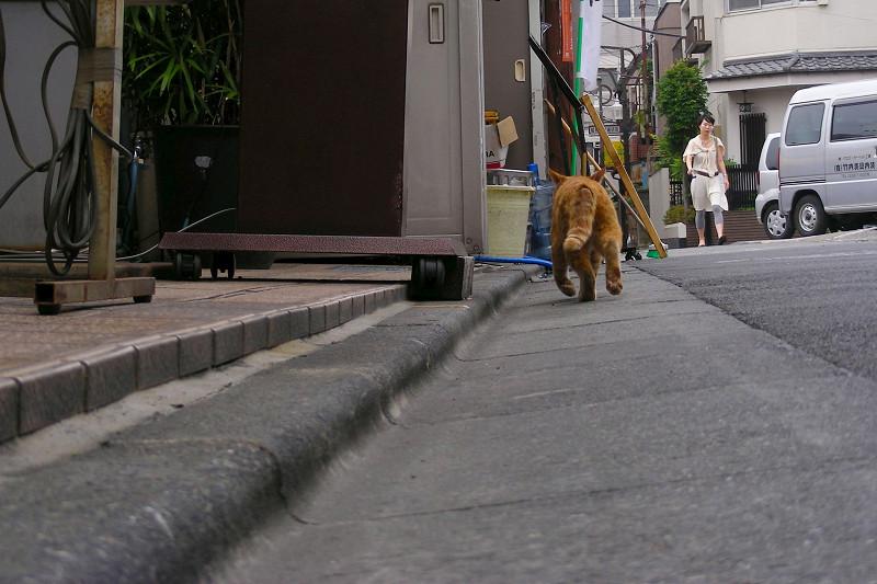 町なかを走り去る茶トラ猫1