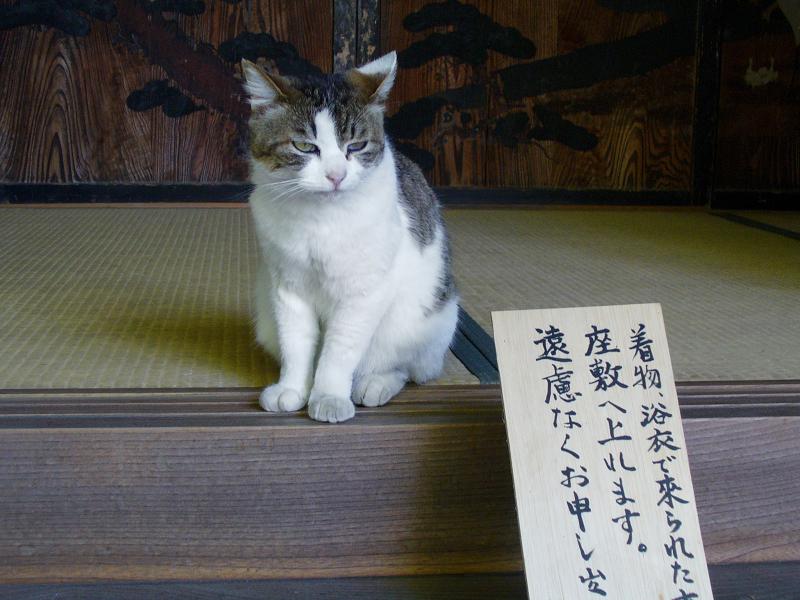 座敷入口のキジ白猫1