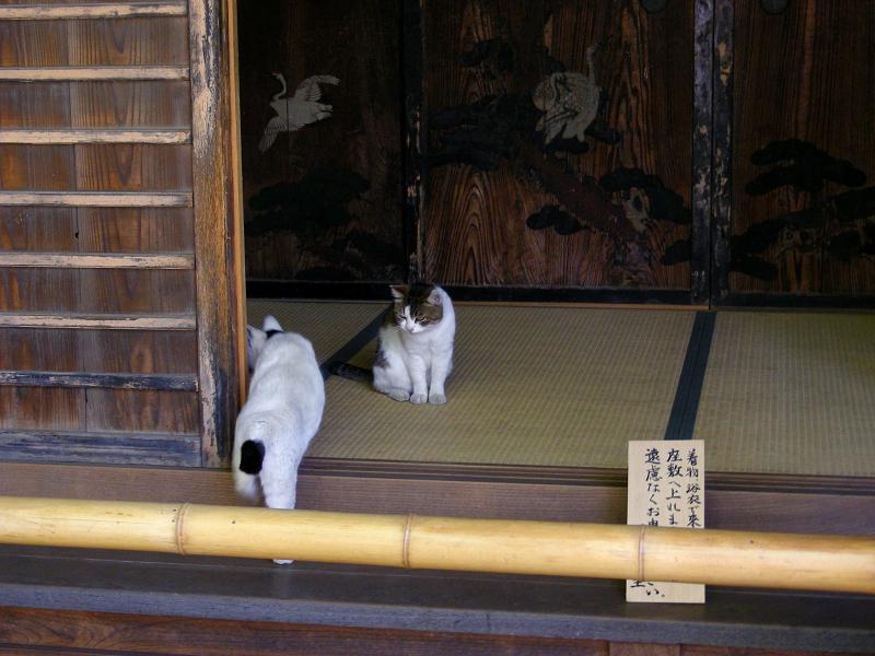 座敷入口のキジ白猫2