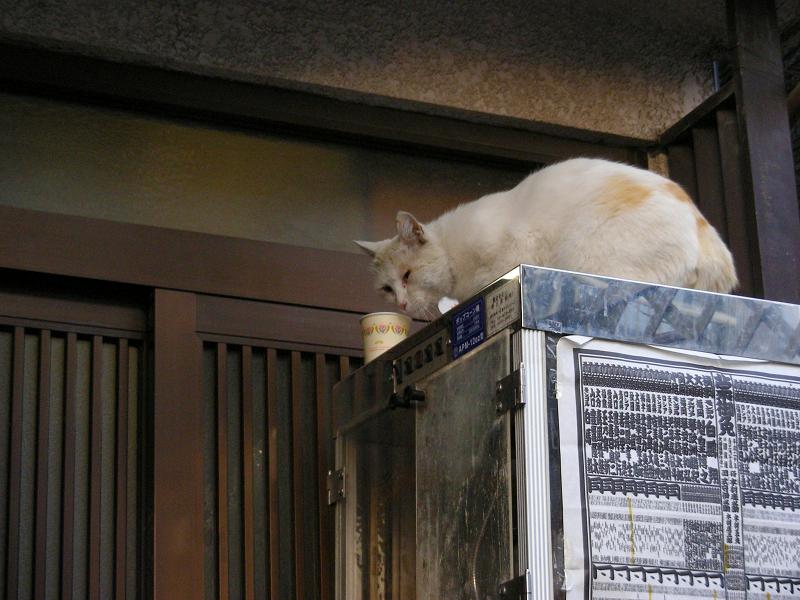 冷蔵庫とカップ麺と猫2