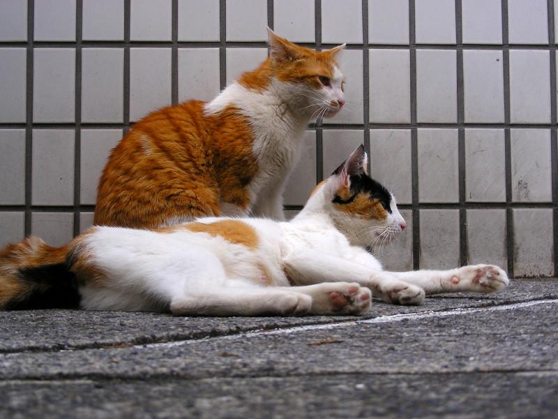 タイル前の猫2匹2