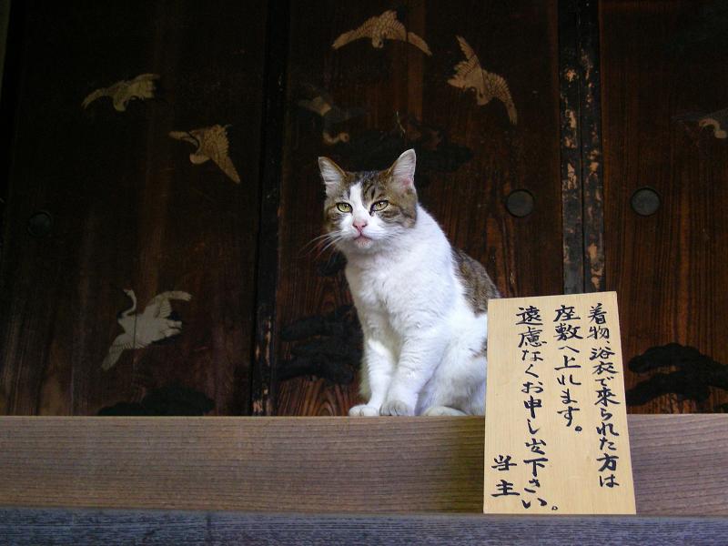 座敷入口のキジ白猫3