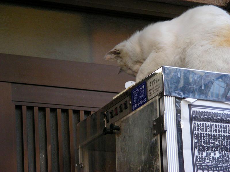 冷蔵庫とカップ麺と猫3