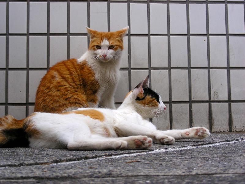 タイル前の猫2匹3