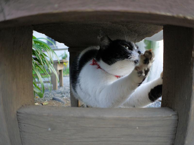 ベンチの下で伸びをする白黒猫1