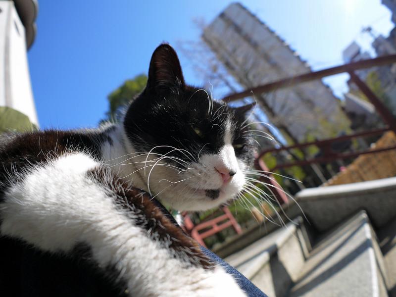 輝く青空と黒白猫1