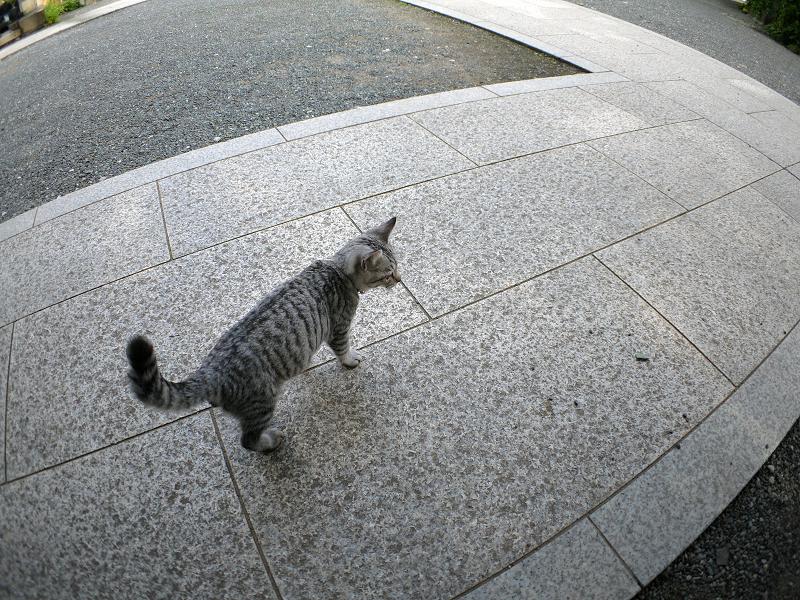 膝からホースへのサバトラ仔猫2
