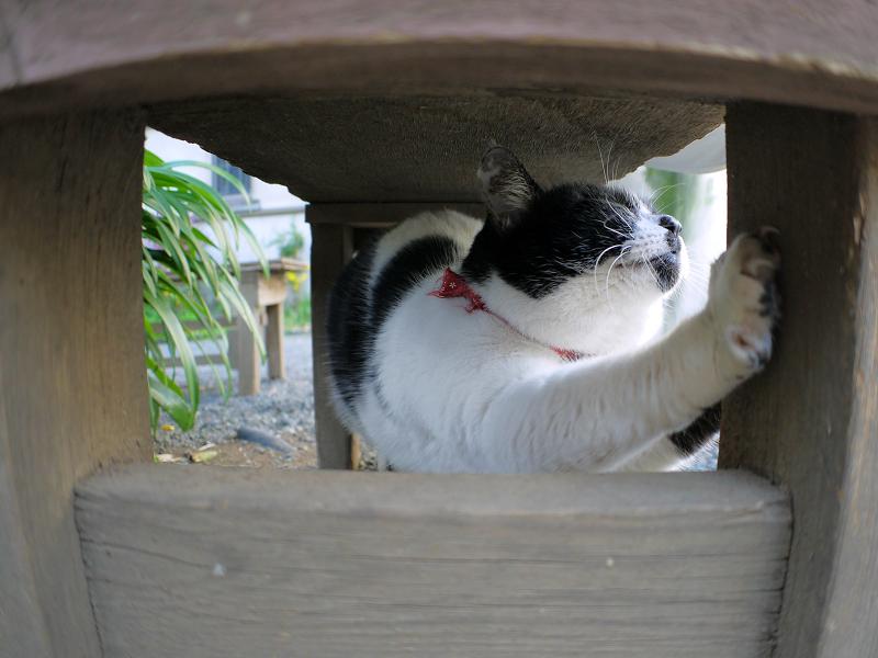 ベンチの下で伸びをする白黒猫2