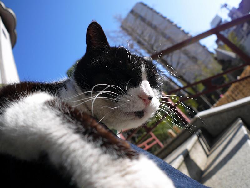 輝く青空と黒白猫2