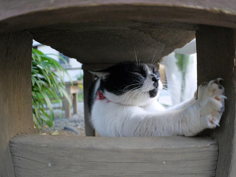 ベンチの下で伸びをする白黒猫3