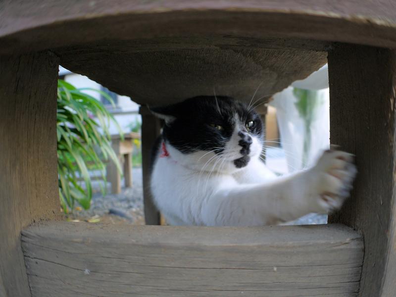 ベンチの下で伸びをする白黒猫4