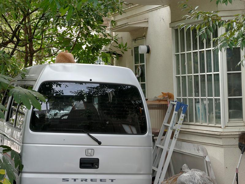 車の上と窓の猫たち1