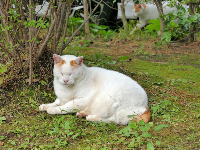 草むらの茶白猫たち1