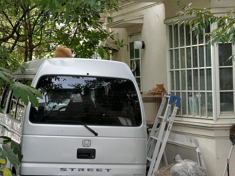車の上と窓の猫たち2
