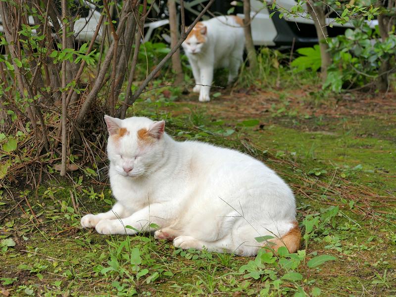 草むらの茶白猫たち2