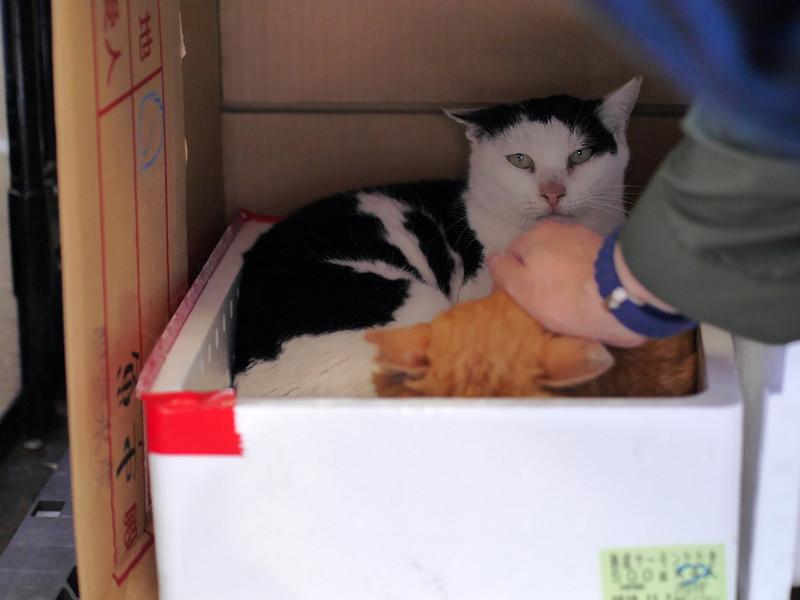 発泡スチロールハウスの猫たち1