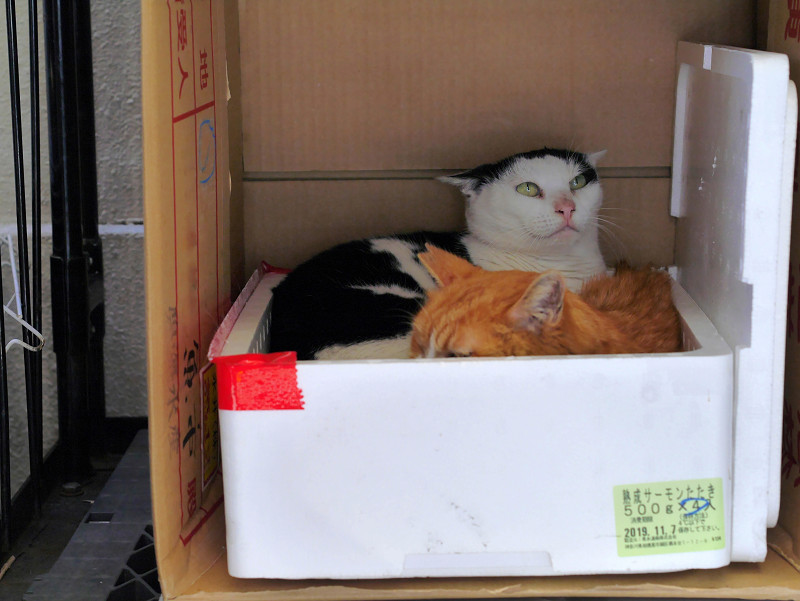 発泡スチロールハウスの猫たち2