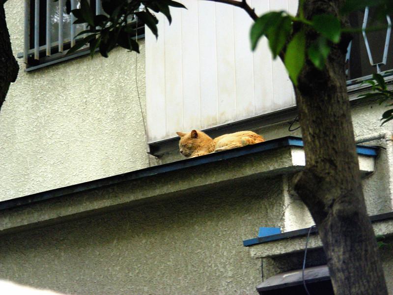 屋根の庇と茶トラ猫