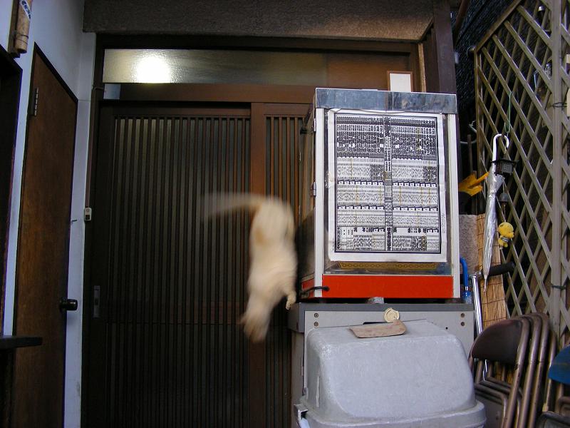 お店の冷蔵庫から飛び降りた猫2