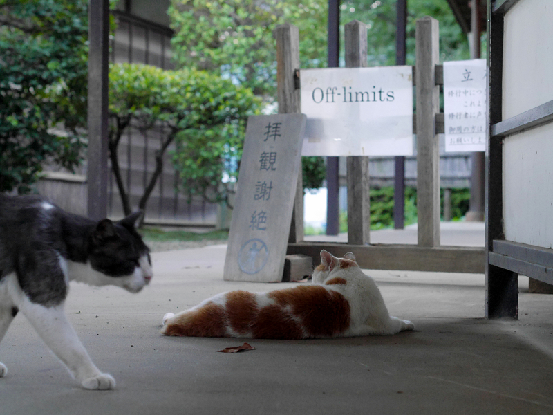 通路を横切る黒白猫1