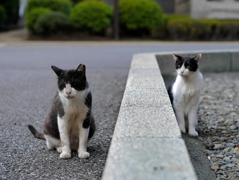 縁石を挟んだ黒白猫たち1