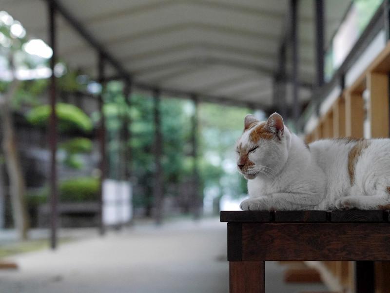 通路のベンチに座る茶白猫1