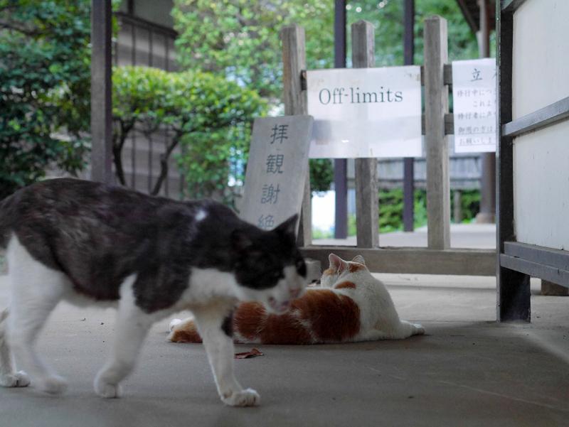 通路を横切る黒白猫2