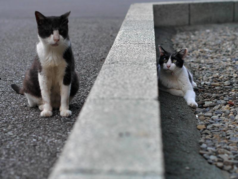 縁石を挟んだ黒白猫たち2