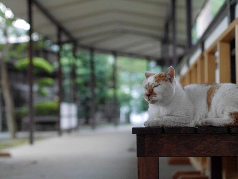 通路のベンチに座る茶白猫2
