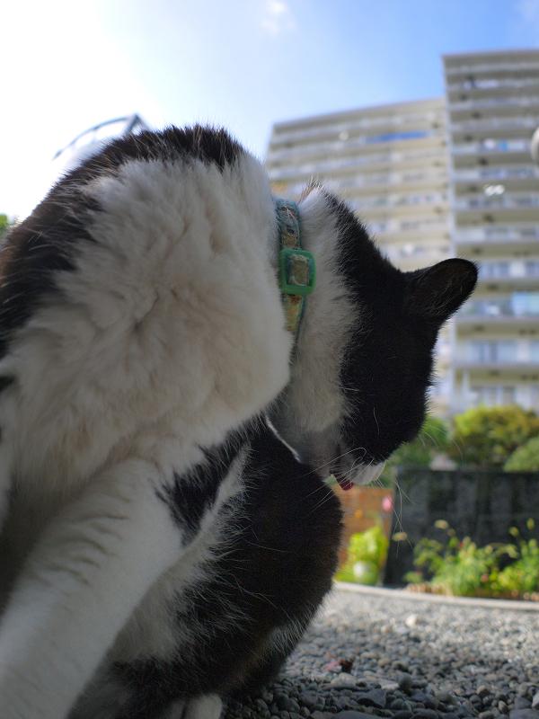 ひたすら毛繕いの黒白猫1