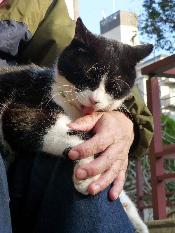 私の手を舐めている黒白猫1