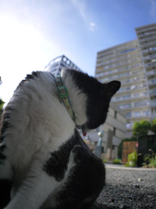 ひたすら毛繕いの黒白猫2