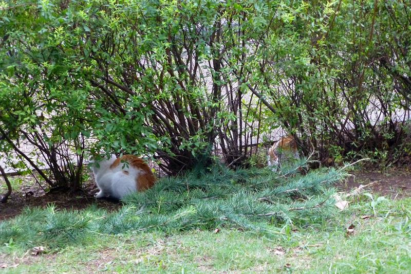 公園草むらの猫たち