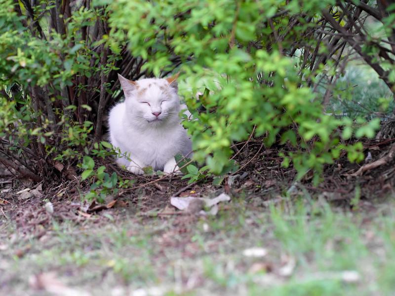 公園草むらの猫1