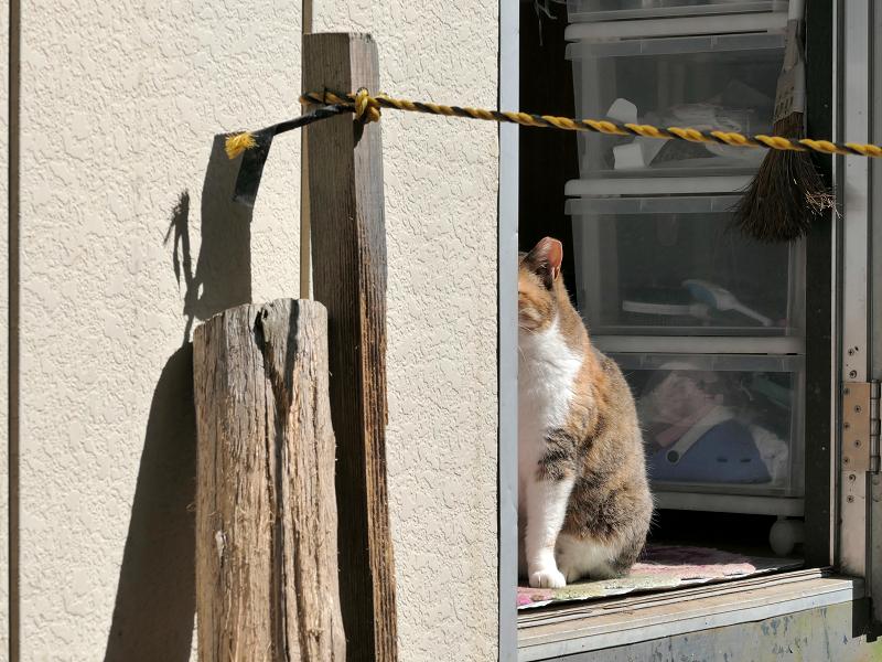 簡易ハウスから見ている猫2