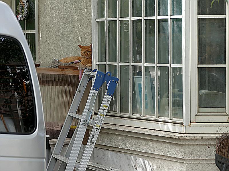 窓枠の横の茶トラ猫